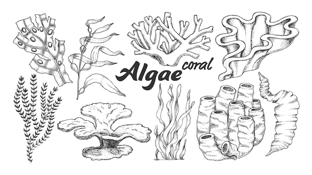 藻海藻サンゴのイラスト。 Premiumベクター
