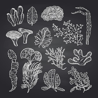 Algae sketch.  seaweed set on black chalkboard