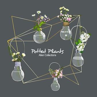 Allen potted plants
