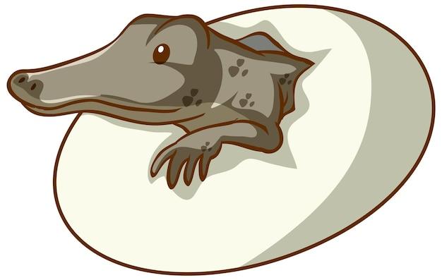 Alligatore che cova da un uovo su sfondo bianco