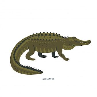 Alligator.
