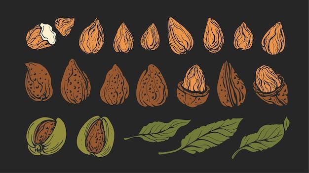 Миндаль и набор листьев