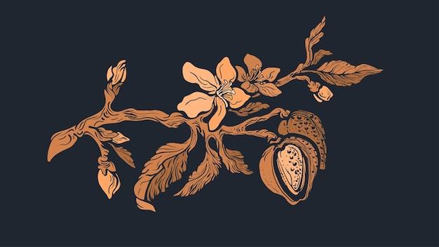 아몬드 지점. 황금 천연 너트, 잎, 꽃이 피었습니다. 아트 빈티지 기호