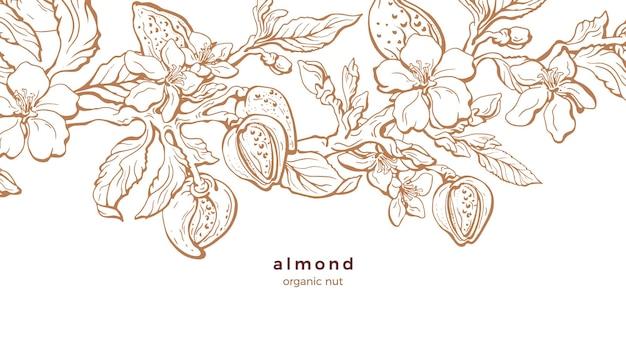 아몬드 농장. 자연 지점, 너트, 잎. 꽃 그림입니다.
