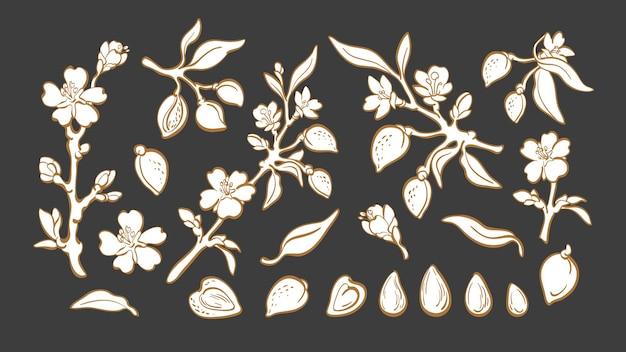 아몬드 세트 천연 너트 식물 가지 과일 잎 꽃 그래픽 일러스트