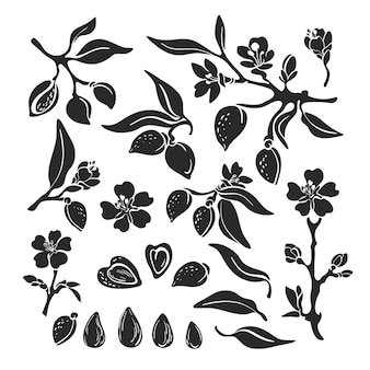 아몬드 세트 천연 너트 식물 격리 지점 과일 잎 꽃 컬렉션