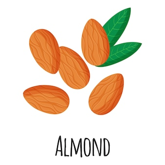 Almond superfood nuts for template farmer market design, label and packing. natural energy protein organic food. vector cartoon isolated illustration.