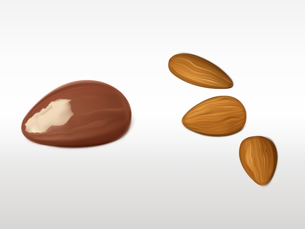 Almonds and brazilian nut set isolated on white background.