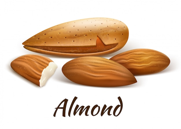 Almonds inshell and kernels nearby. whole fruits and a piece of chipped part.