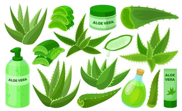 Aloe vera  cartoon set icon.  illustration cactus on white background.  cartoon set icon aloe vera.