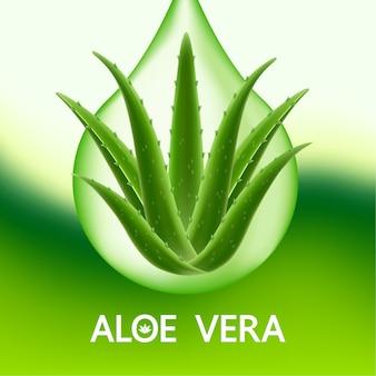 Aloe vera collagen and serum for skin care cosmetic .