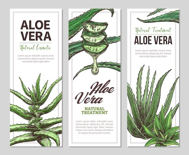 손으로 그린 식물 일러스트와 함께 알로에 베라 가로 배너 프리미엄 벡터