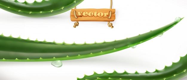 Aloe vera. medicinallant, 3d  icon