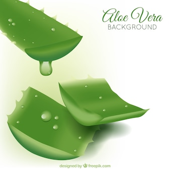 Aloe vera plant background