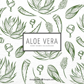 Aloe vera sketch background