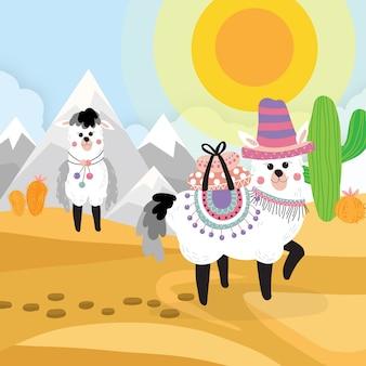 사막에서 알파카 배경