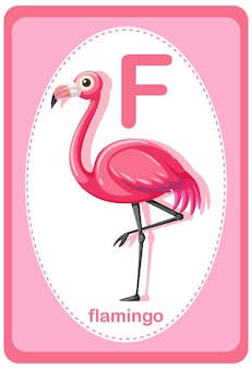 Alphabet flashcard with letter for flamingo