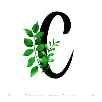 Alphabet letter c with watercolor leaves background