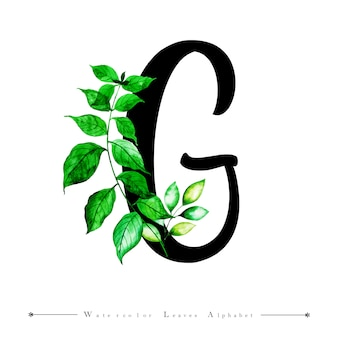 Alphabet letter g with watercolor leaves background