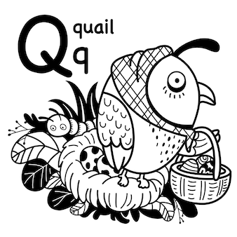 Alphabet letter q quail in hand drawn