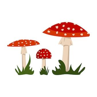 Грибы мухомора с красными шляпками и белыми пятнами.