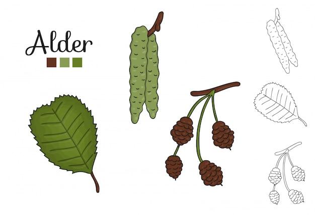 Векторный набор элементов дерева ольхи изолированы. ботаническая иллюстрация ольхи листьев, бранч, цветы, фрукты, ament, конус. черно-белые картинки.