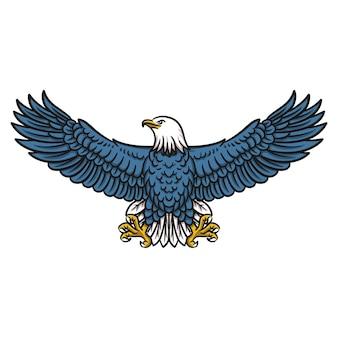 American bald eagle, illustration of flying eagle