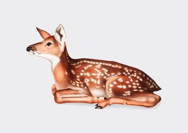 アメリカの鹿イラスト