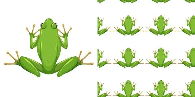 미국 녹색 나무 개구리 흰색 배경에 고립 및 원활한
