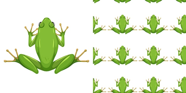 American green tree frog isolated on white background and seamless