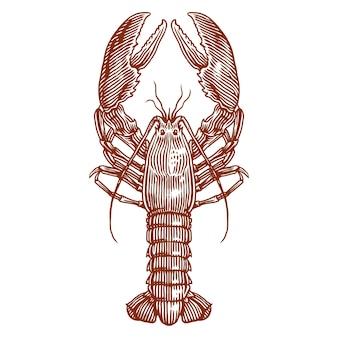 Иллюстрация омаров американского омара