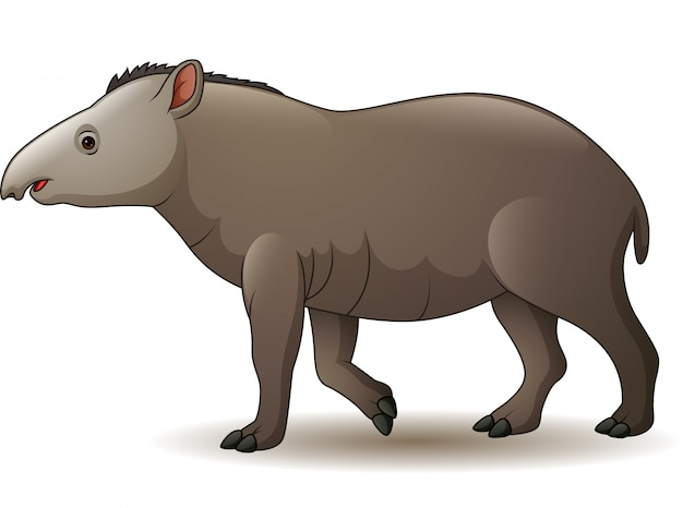 American tapir isolated on white background
