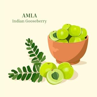 Amla fruit elements set