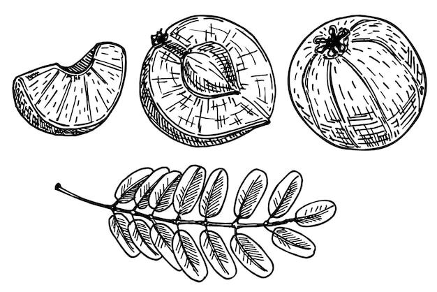 Плоды амлы или ягоды на белом, индийском свежем спелом крыжовнике