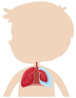 인간 폐의 해부학