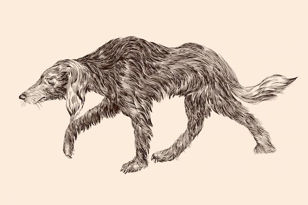 古いラメ犬が頭を曲げています。ベージュ色の背景に孤立した人物。