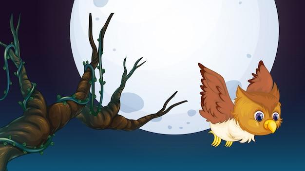 夜のフクロウ狩り