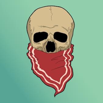 アナキスの頭蓋骨
