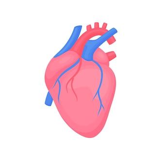 해부학 적 심장입니다. 심장 진단 센터 표지판. 인간의 다채로운 심장 평면 디자인. 의료 과학 해부학 그림입니다.