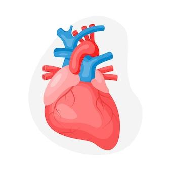 해부학적 인간의 심장과 심혈관 시스템은 회색 배경에 격리되어 있습니다. 건강 관리 개념입니다. 평면 벡터 일러스트 레이 션. 의학, 치료, 건강 관리 개념을 위한 디자인 프리미엄 벡터