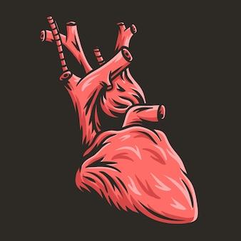 Anatomical of human heart