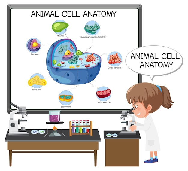 Anatomy of animal cell (biology diagram)