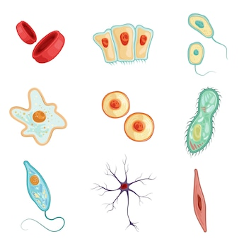 Anatomy of human cells set of detailed  illustrations on a white background