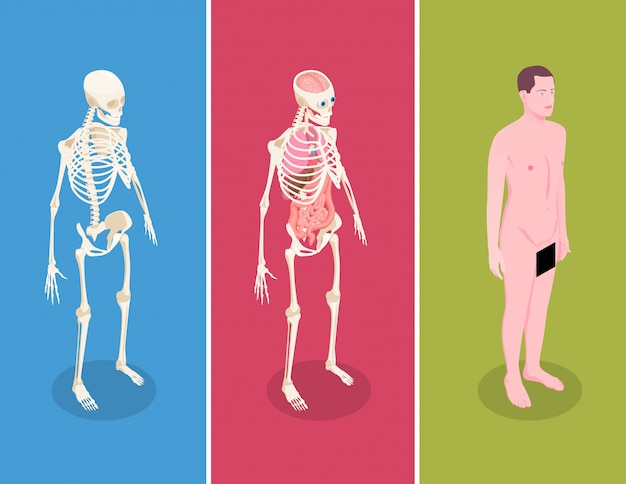 Anatomy isometric banners set with male body and two human skeletons on colorful background 3d isolated