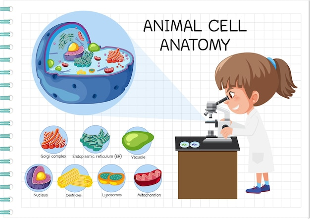 Анатомия животной клетки (схема биологии)