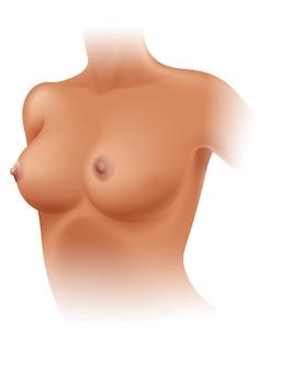白い背景の女性の乳房の解剖学