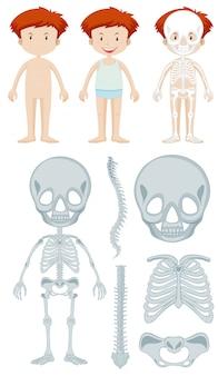 Anatomy of little boy
