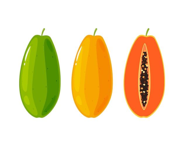 Анатомия папайи