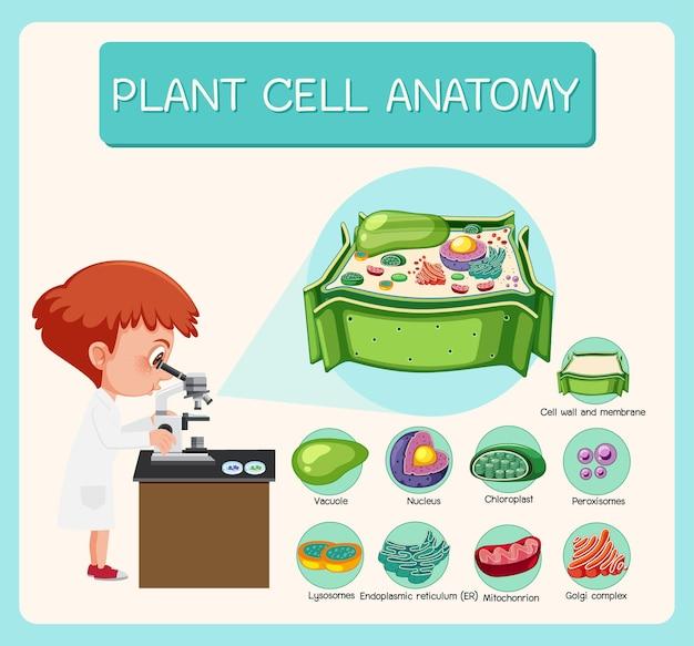 식물 세포 생물학 다이어그램의 해부학