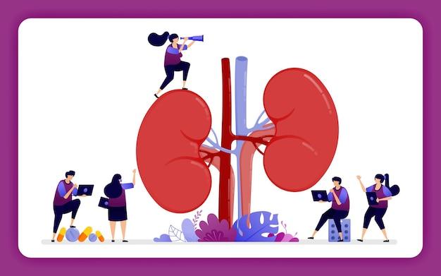 의료 및 건강 교육을위한 신장의 해부학